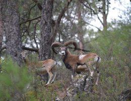טיול בטבע בהרי הטרודוס קפריסין